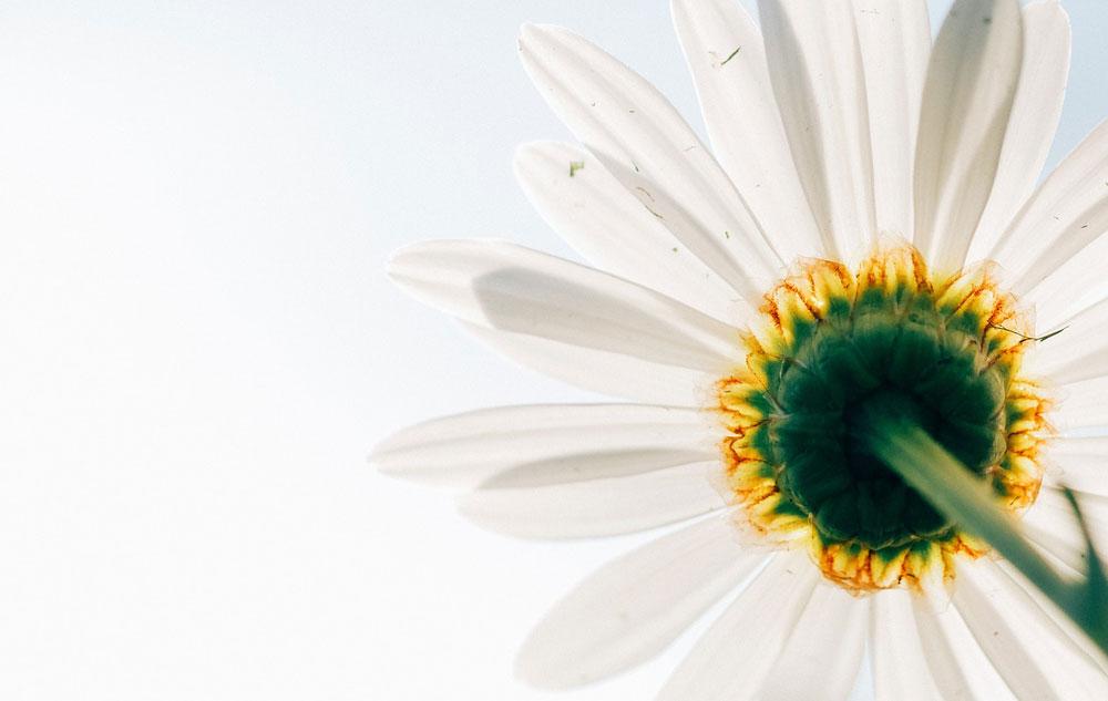 Naturkosmetik: Alles Bio oder was?