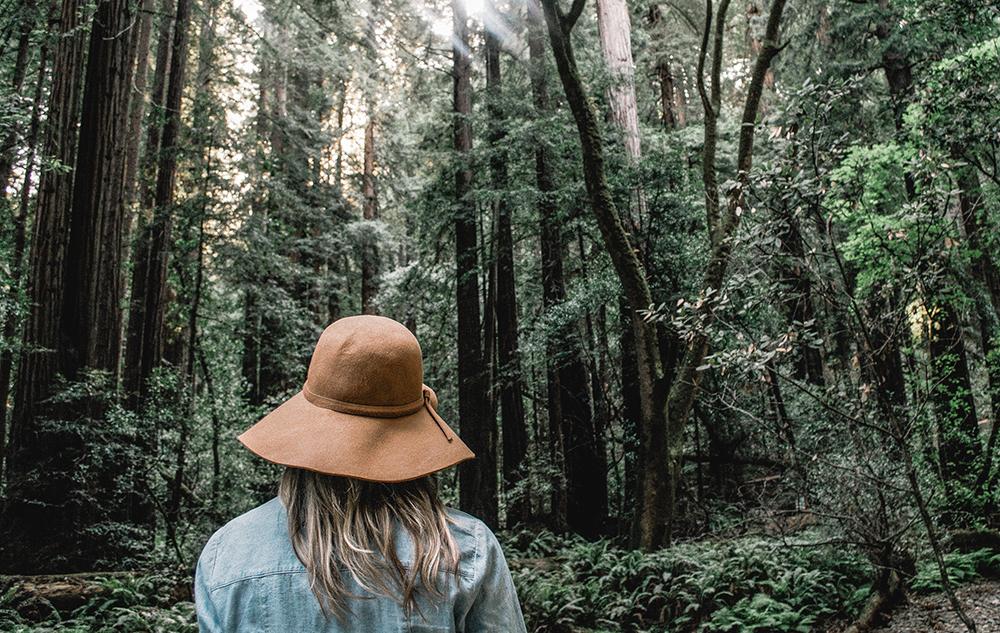 Verwurzelt mit dem Leben: Bäume