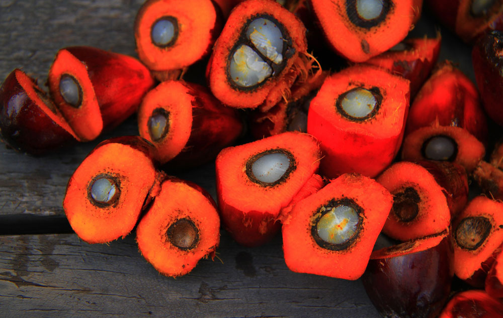 Fakten: COSMOS: Palmöl nur noch nachhaltig. Bild: pixabay Bearbeitung: naturalbeauty.de