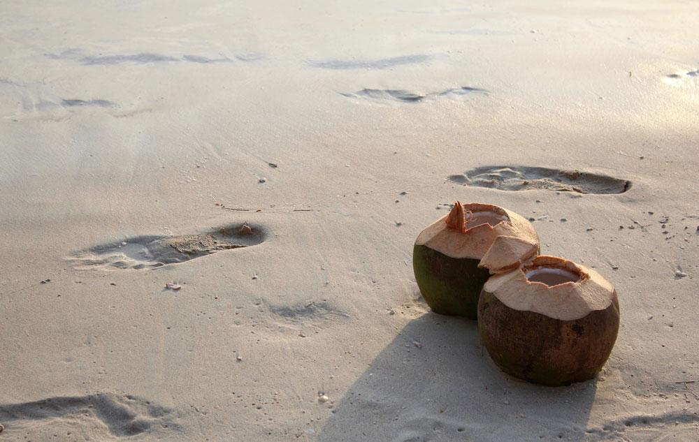 Zum Anbeißen: Sommerhit Kokosnuss