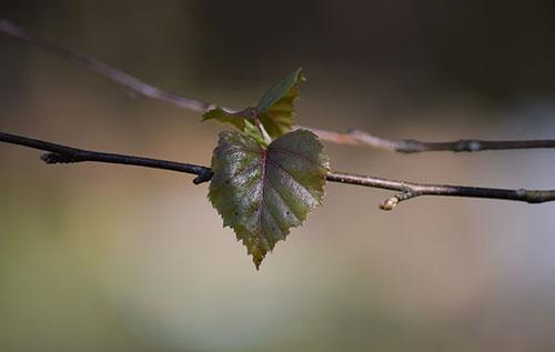 Frühling im Tiegel Bild: pixabay