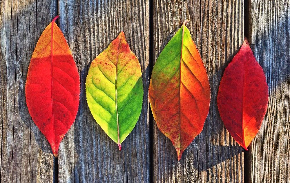 So schön pflegt der Herbst!