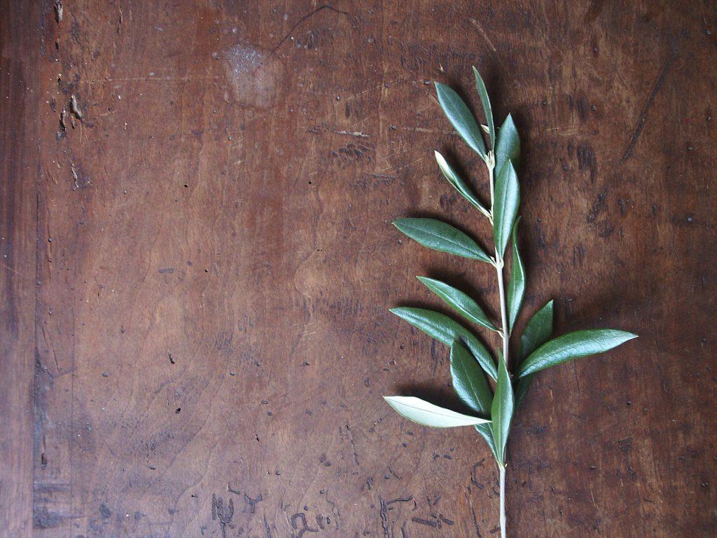 Grünes Gold: Olivenöl, Foto: PIXABAY
