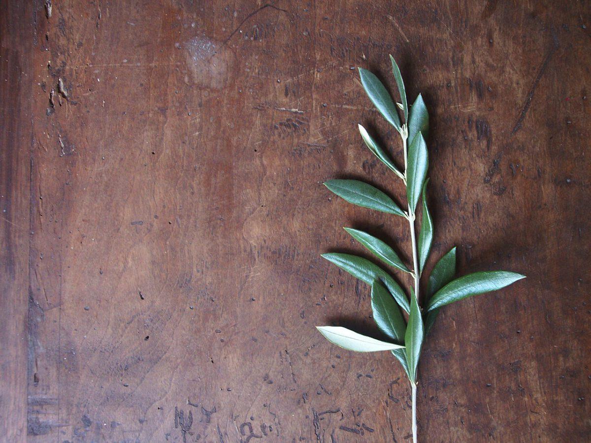 Grünes Gold: Olivenöl
