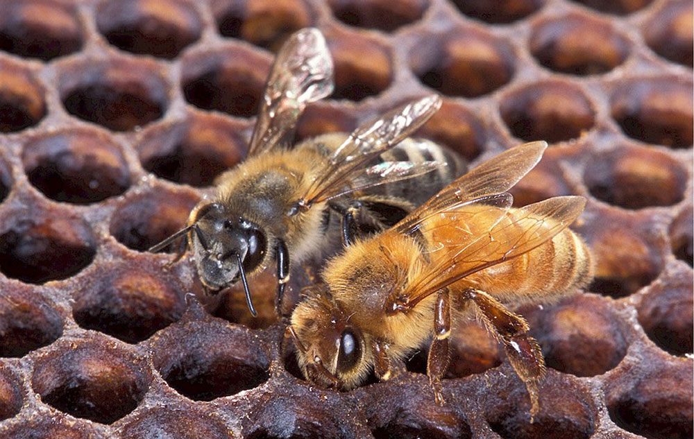 vegan first - 5 Alternativen für Bienenwachs, Foto: PIXABAY