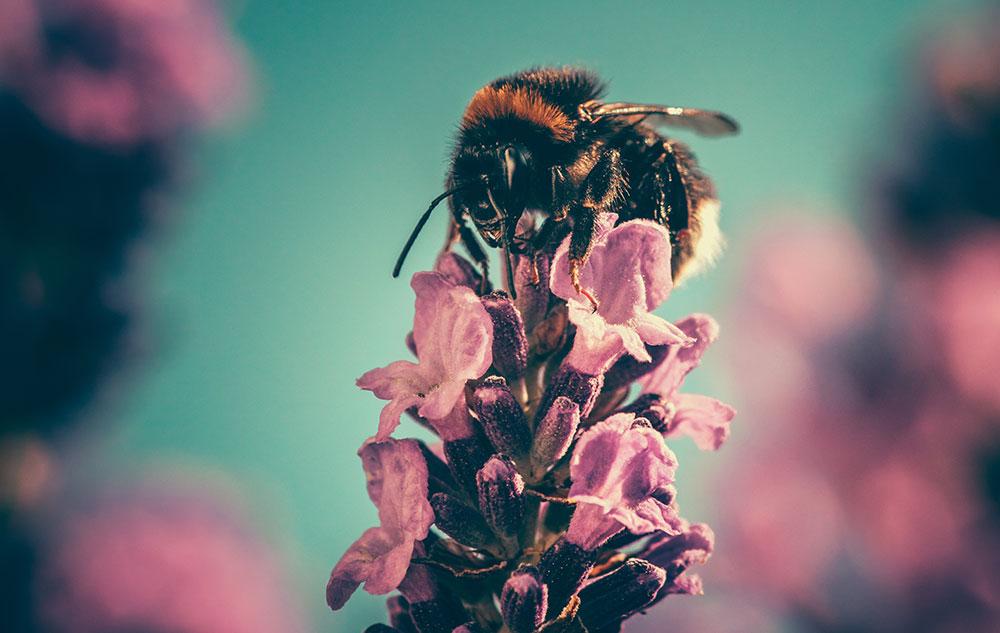 Pollenalarm! Das hilft bei Heuschnupfen