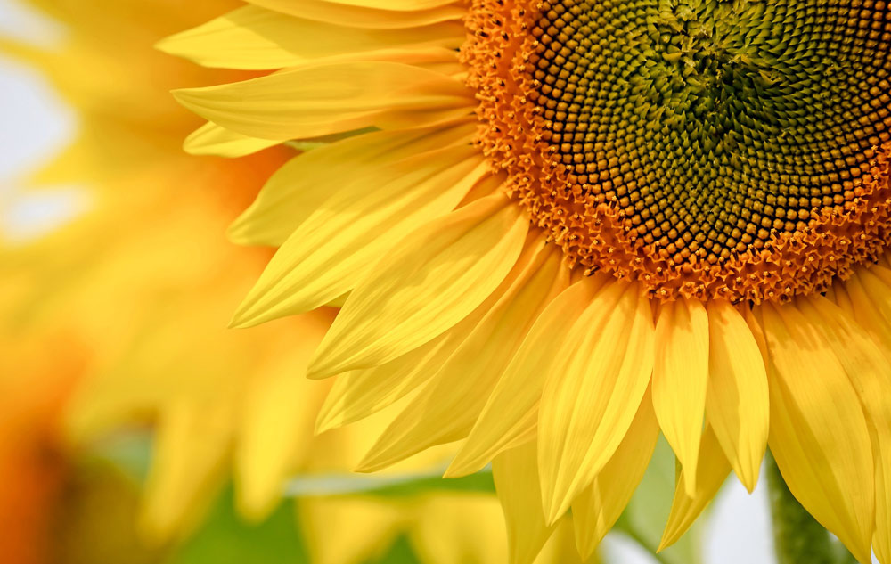 MAGAZIN Blumen – ihre Botschaft und wie sie in Naturkosmetik wirken Bild: pixabay