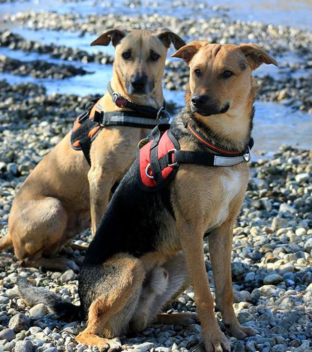 BLOG Hund & Herrchen: Hundeshampoo vs. Hundeseife Bild: Jenny Pohl
