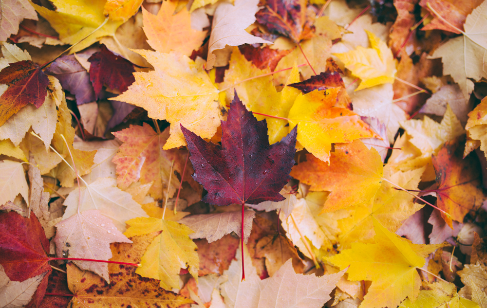 WE LOVE WE LOVE Herbst-Inspiration! Bild: Unsplash