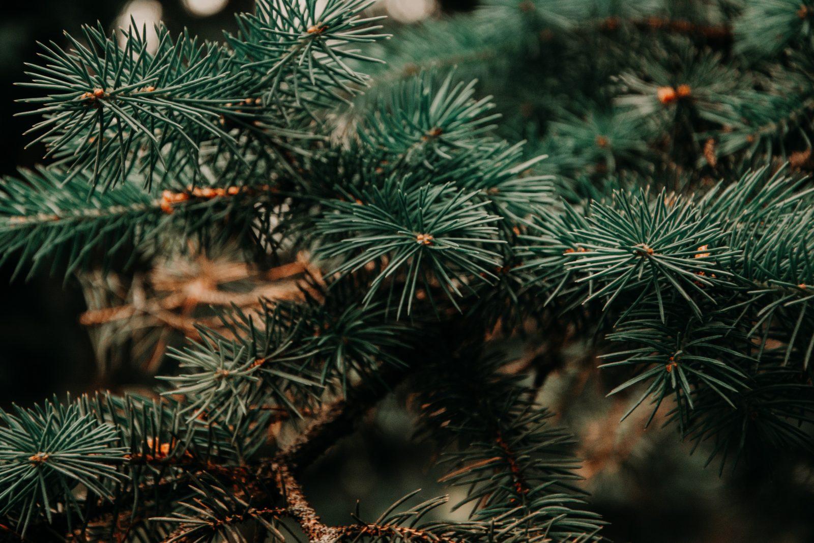MAGAZIN Wellness aus dem Wald mit ätherischen Ölen Bild: pexels