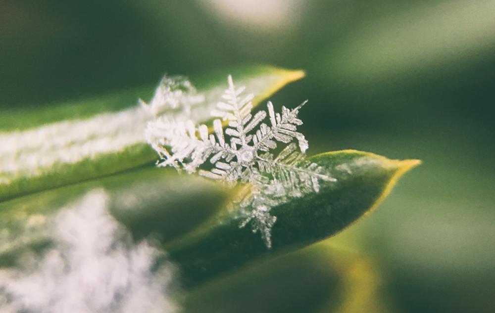 Winterlieblinge: Unsere Produkthighlights für die kalte Jahreszeit