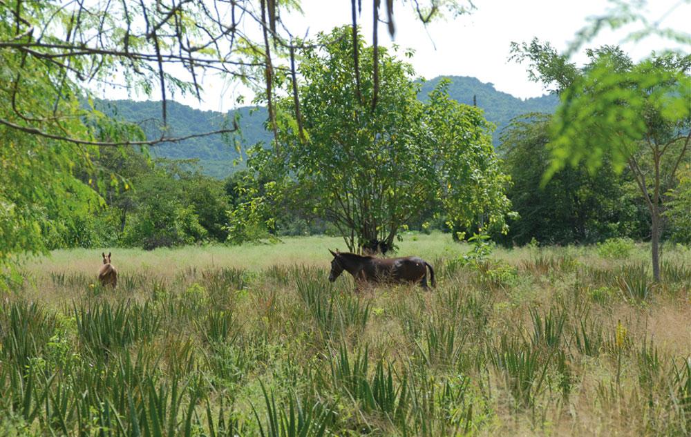 Exklusives Interview: PHARMOS NATUR – Biodiversität geht alle an!